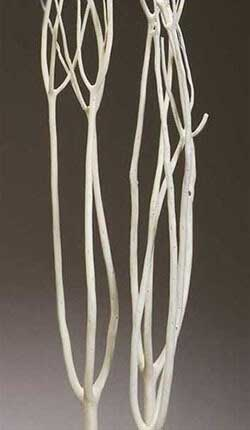 Dried Branches