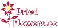 DriedFlowers.co
