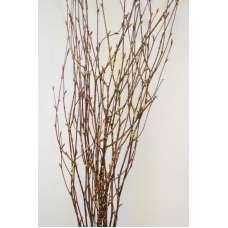 Gold Beaded Birch Branches