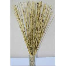 Green Pan Reed Bunch
