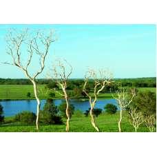 Dried Manzanita Branches - Sandblasted Bulk Manzanita