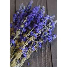 Dried Dark Blue Larkspur Flowers For Sale