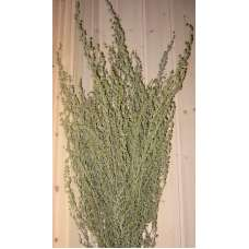 Dried Artemesia (Artemisia, Silver King, Wormwood)