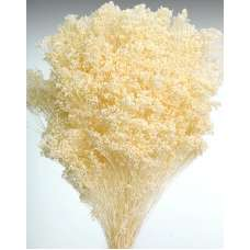 Dried Baby's Breath Colors - Dried Gypsophila