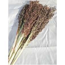 Dried Broom Corn - Decorative Black