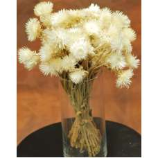 Dried Everlasting Flowers - Natural Helichrysum
