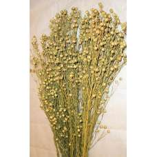 Dried Flax Bunch - Linum Bunch
