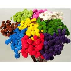 Dried Floral Button Flowers - Colors