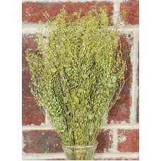 Dried Lepidium Bunch