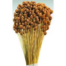 Dried Pineapple Button Flowers