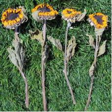 Dried Sunflowers Bunch - Medium