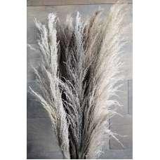 Dried Ornamental Pampas Grass - Dark Feather Stem