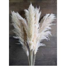 Dried Ornamental Pampas Grass - Feathered Stem