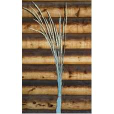 Dried Indian Grass