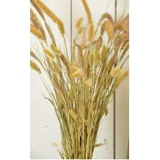 Dried Seteria Grass - Setaria Grass