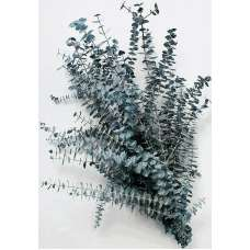 Preserved Eucalyptus Branches - Blue