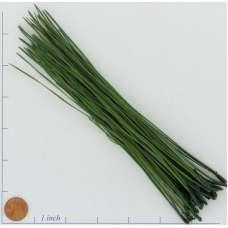 Long Pine Needles - Pine Straw