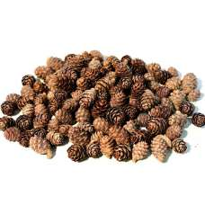 Black Spruce Cones - Small Cones
