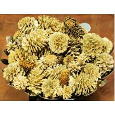 Bleach Assorted Pine cones