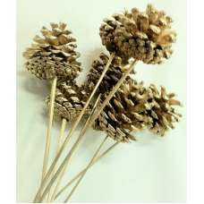 Austriaca Pine Cones - Gold Painted Holiday