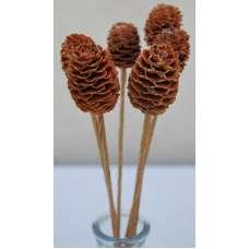 Alder Cones - Sabulosum Cone Stemmed