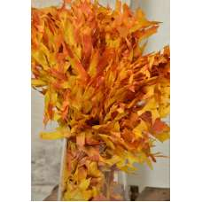 Preserved Mango Oak Leaves (1 LB dried leaves)
