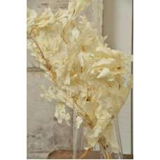 Preserved White Oak Leaves (1 LB dried leaves)