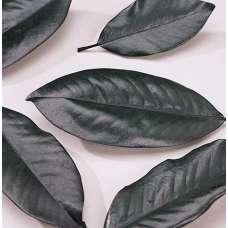 Magnolia Leaves - Bulk Box