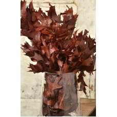 Preserved Chocolate Oak Leaves