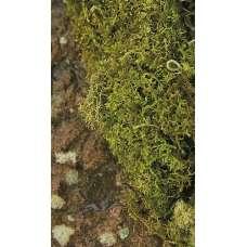 Dried Sheet Moss - Natural Bulk Box