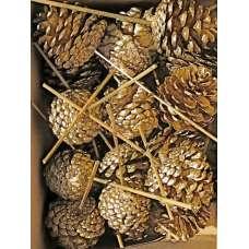 Gold Stemmed Pine Cones (Ponderosa)