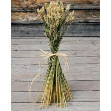 Hooked Barley Bunches