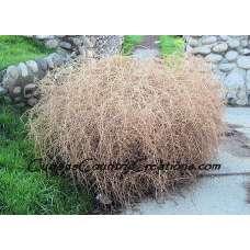 Christmas Tumbleweed