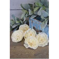 Sola Wood Flat Protea Flowers