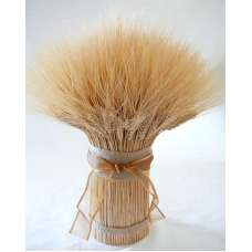 Blond Wheat Cone -- 3LB Extra Large Bundle